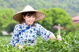 Warum ist Matcha gesünder als normaler grüner Tee?